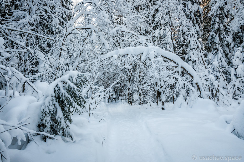 The Footpath in a Snowy Forest